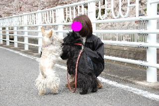 20080401sakura2