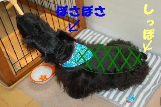 20080707yamato3_2
